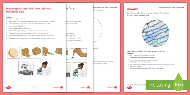 Preparing Onion Cell Microscope Slide Investigation Instruction Sheet Print-Out - Investigation Help Sheet, science practical, method, instructions, microscope, viewing cells, onion