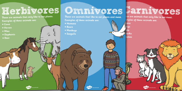 Herbivores Omnivores and Carnivores Posters - poster, science