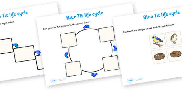 Blue Tit Life Cycle Worksheets -   worksheets, worksheet, blue tit worksheets, life cycle worksheets, blue tit, blue tit life cycle, minibeast worksheets