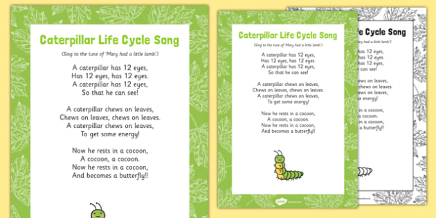 Caterpillar Life Cycle Display Pack - EYFS, butterfly, egg life, cycle, cocoon, caterpillar