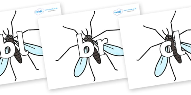 Initial Letter Blends on Crane Flies - Initial Letters, initial letter, letter blend, letter blends, consonant, consonants, digraph, trigraph, literacy, alphabet, letters, foundation stage literacy