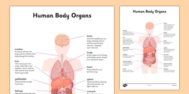 body organs information - human body, organs, information, Human body