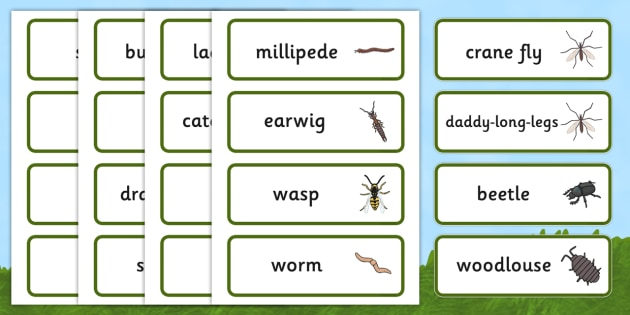 Minibeast Word Cards - Word Card, Minibeasts, Topic, Foundation stage, knowledge and understanding of the world, investigation, living things, snail, bee, ladybird, butterfly, spider, caterpillar