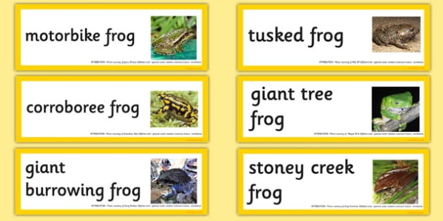 Australian Amphibians Word Cards - australia, animals, amphibians