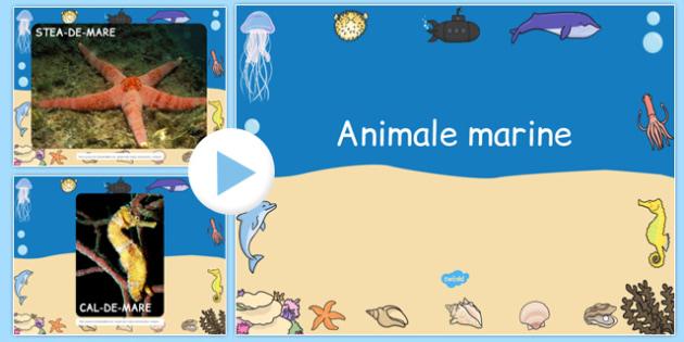 Animalele marine - Prezentare PowerPoint - animale marine, prezentare, power point, științe, informații, materiale, materiale didactice, română, romana, material, material didactic