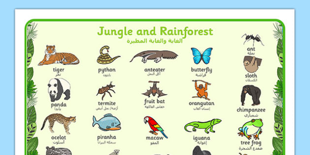 Jungle and Rainforest Word Mat Arabic Translation - arabic, Jungle, Rainforest, word mat, writing aid, vines, A4, display, snake, forest, ecosystem, rain, humid, parrot, monkey, gorilla