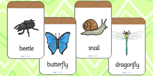 Minibeast Flashcards - minibeasts, flash cards, visual aids