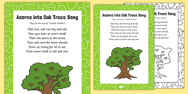 Acorns Into Oak Trees Song - plant, seed, life cycle, tune, acorns, oak tree, song, growing, eyfs, early years, EAD