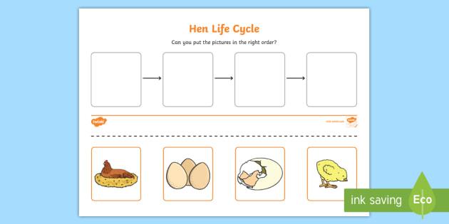Hen Life Cycle Worksheets - australia, hen, life cycle, sheet