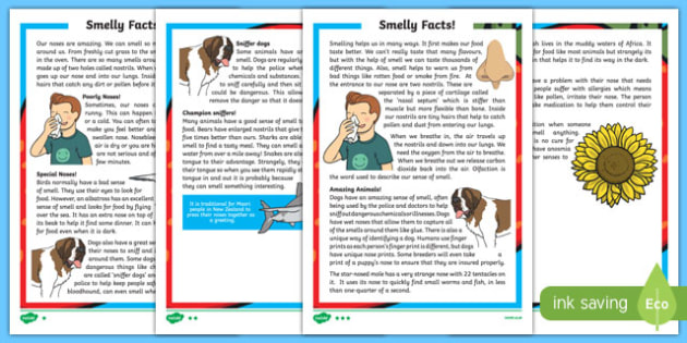 Sense of Smell Differentiated Reading Comprehension Activity