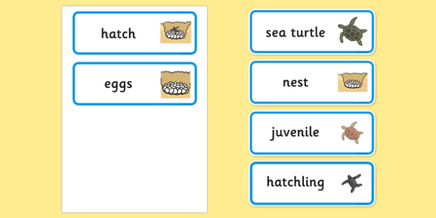 Sea Turtle Life Cycle Word Cards (under the Sea) - turtle, word cards, words, cards, key words, flashcards, sea turtle life cycle, sea turtle word cards, life cycle cards
