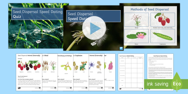 Seed Dispersal Speed Dating - Speed Dating, seed dispersal, animals, wind, water, starter activity