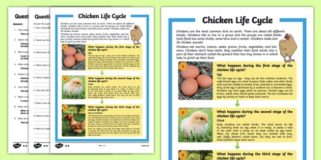 Chicken Life Cycle Differentiated Reading Comprehension Activity
