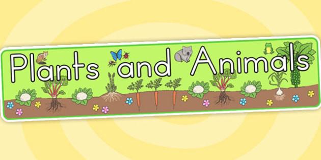 Plants and Animals Display Banner - Australia, Plants, Animal