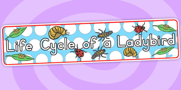 Lifecycle of a Ladybird Banner - life cycles, life cycle, header