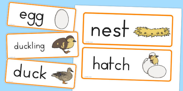 Duck Life Cycle Word Cards - australia, duck, life cycle, cards