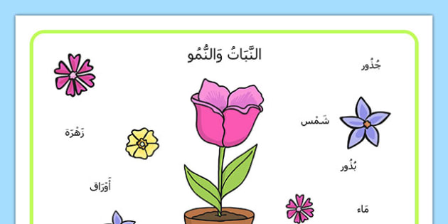 بساط مفردات نمو النبات - النمو، نباتات، إنبات، تشجير، علوم