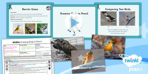 Art: Wildlife: Drawing Birds in Pencil UKS2 Lesson Pack 2