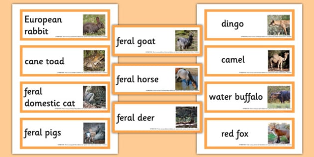 Introduced Animals in Australia Word Cards - australia, animals, introduced
