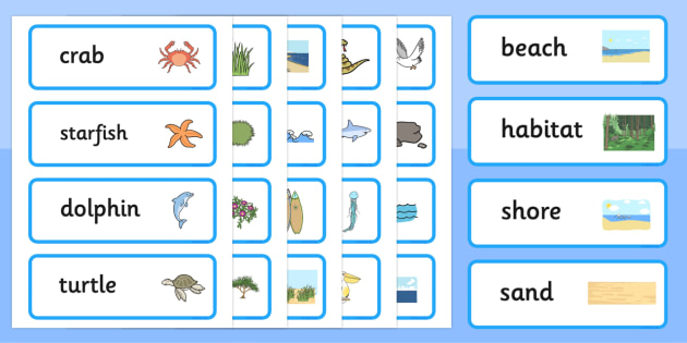 Beach Habitat Word Cards - australia, Science, Year 1, Habitats, Australian Curriculum, Beach, Living, Living Adventure, Environment, Living Things, Animals, Plants, Word Cards
