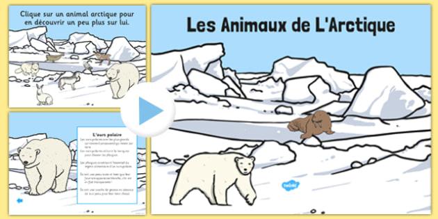 Les Animaux de L'Arctique PowerPoint French - french, winter, arctic, animals, habitat, powerpoint