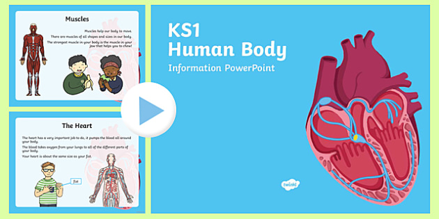 KS1 Human Body Information PowerPoint, internal organs,