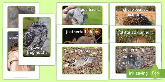 Australian Animals That Hibernate or Torpor Photo Pack