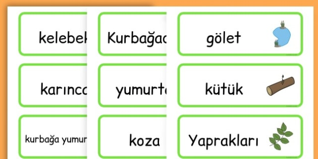 Life Cycle Word Cards - life cycles, lifecycle, visual aid, words - Turkish