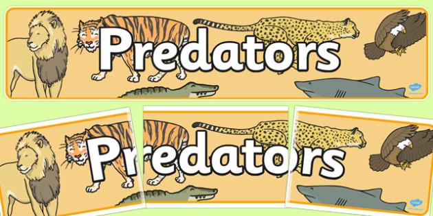 Predators Display Banner - predators, display banner, display
