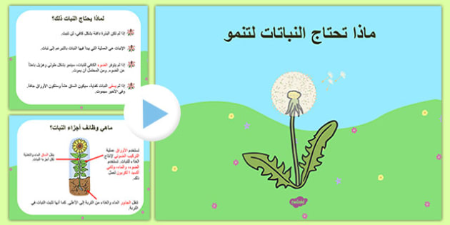 What Plants Need to Grow PowerPoint Arabic - arabic, plants, living things, what plants need to gor ks2, what do plants need to grow, things plants need to grow, growth