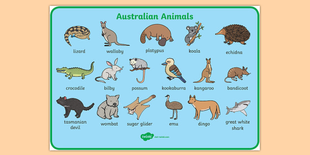 Australian Animals Word Mat - animals, australian animals, words