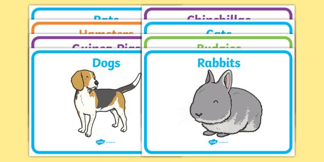 Editable Class Group Signs (Pets) - Pet, pets, group signs, group labels, group table signs, table sign, teaching groups, class group, class groups, table label