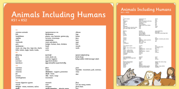 Year 1-6 Animals Including Human Scientific Vocab Progress Poster