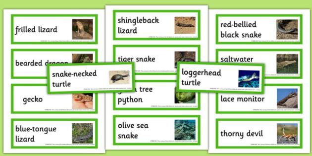 Australian Reptiles Word Cards - australia, reptiles, word cards, word, cards