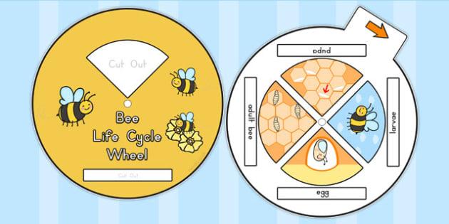 Bee Life Cycle Spin Wheel - australia, bee, life cycle, wheel