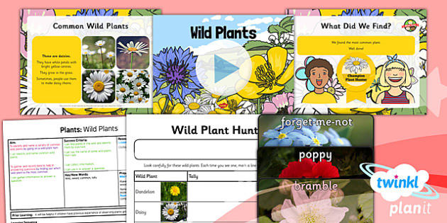 Science: Plants: Wild Plants Year 1 Lesson Pack 2