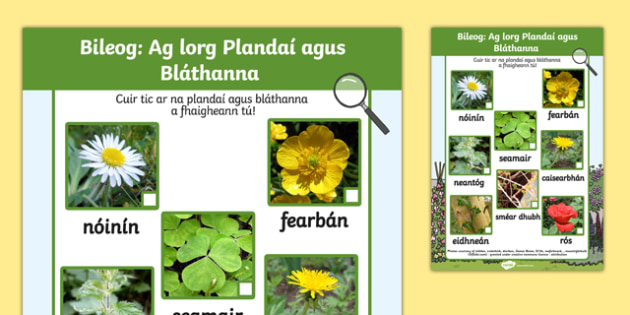 Plants and Flowers Hunt Sheet Gaeilge - Plants hunt, flowers hunt, investigation, finding plants, Plant growth , knowledge and understanding of the world, investigation, living things, snail, bee, ladybird, butterfly, spider