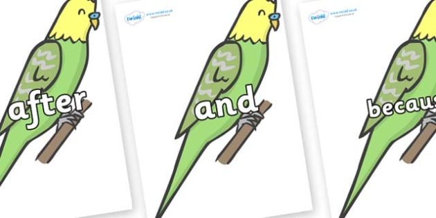 Connectives on Budgies - Connectives, VCOP, connective resources, connectives display words, connective displays