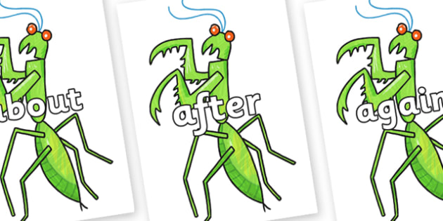 KS1 Keywords on Praying Mantis to Support Teaching on The Bad Tempered Ladybird - KS1, CLL, Communication language and literacy, Display, Key words, high frequency words, foundation stage literacy, DfES Letters and Sounds, Letters and Sounds, spellin