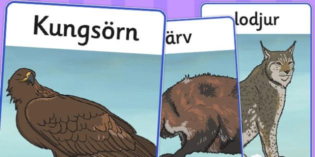 Swedish Animals Display Posters - swedish, animal, display poster