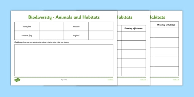 Biodiversity Habitat and Animal Matching and Drawing Activity Sheet - matching, activity sheet, animals, habitat, species, green schools, biodiversity, worksheet