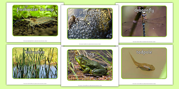 Pond Life Display Photos - pond dipping, pond life, display photos, display, photos