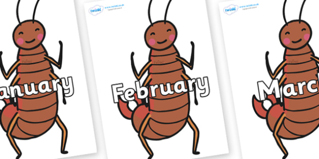 Months of the Year on Earwigs - Months of the Year, Months poster, Months display, display, poster, frieze, Months, month, January, February, March, April, May, June, July, August, September