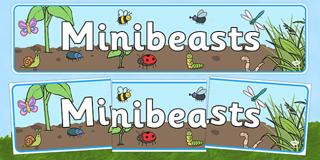 Minibeast Display Banner - Banner, Minibeasts, Display, Topic, Foundation stage, knowledge and understanding of the world, investigation, living things, snail, bee, ladybird, butterfly, spider, caterpillar