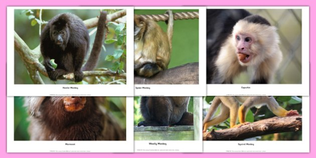 Monkeys Photopack - monkeys, photo pack, photo, pack, animals, monkey