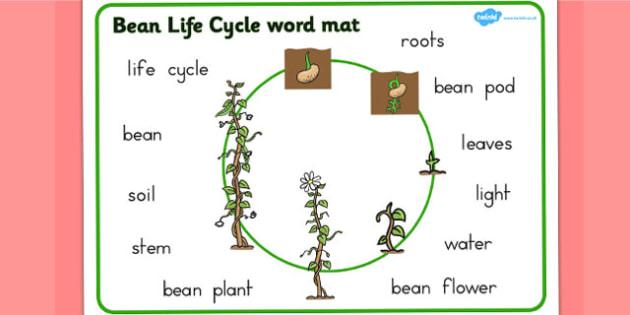 Bean Growth Word Mat - Australia, Bean, Growth, Growing, Word
