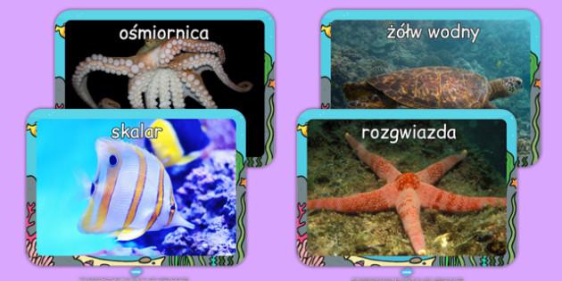 Materiały ze zdjęciami Wodne stworzenia po polsku - ryby