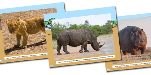 Safari Photo PowerPoint - safari, on safari, safari powerpoint, safari photos, safari photo display, safari discussion powerpoint, safari animals, ks1, ey