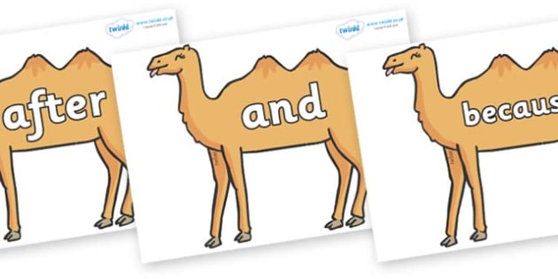Connectives on Camels - Connectives, VCOP, connective resources, connectives display words, connective displays