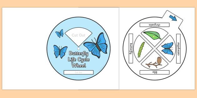 Butterfly Life Cycle Spin Wheel - life cycles, visual aid, wheels
